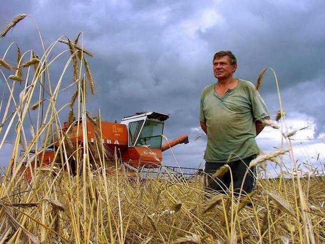 ЕСХН – единый сельскохозяйственный налог