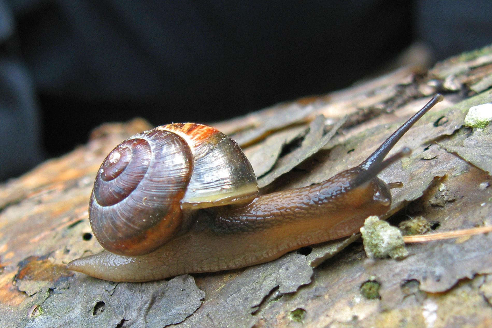 фото и виды улиток