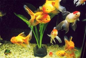 Бизнес-план разведение аквариумных рыбок