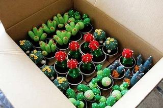 заработок на комнатных растениях