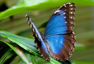 выращивание тропических бабочек