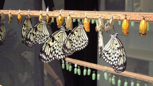 инсектарий для бабочек