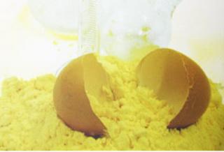 продажа яичного порошка