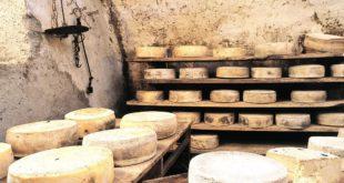 производство сыр