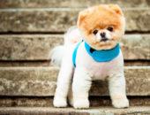 Бизнес с минимальными вложениями: Груминг собак и кошек