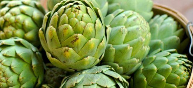 Фермерский бизнес: выращивание экзотических овощей