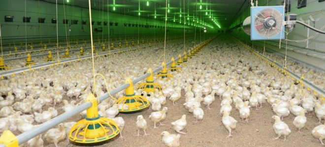 Бизнес план птицеводство яйца скачать бизнес план аквапарк