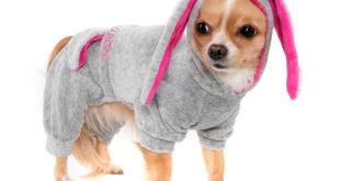 Свой бизнес — одежда для собак
