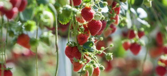 Бизнес план выращивания клубники