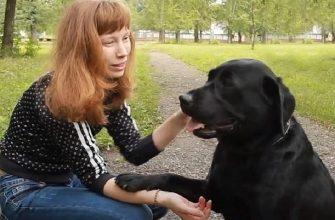 В Уфе незрячую мать с собакой-поводырем высадили из автобуса