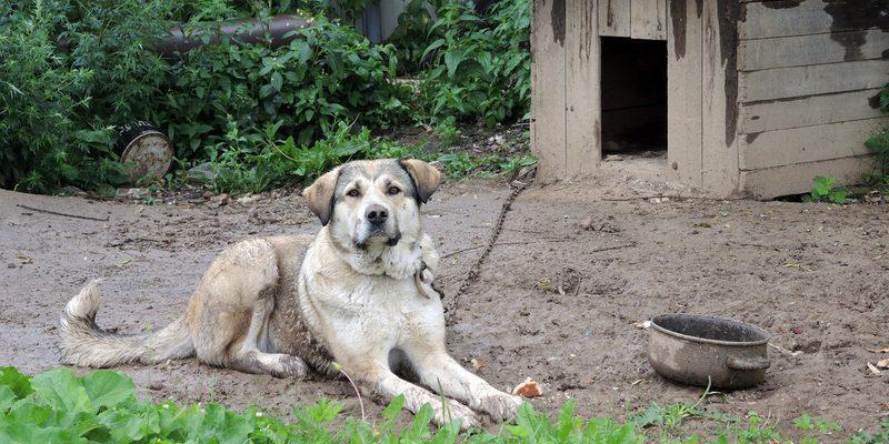 В РФ предложили наказывать хозяев напавших на людей собак